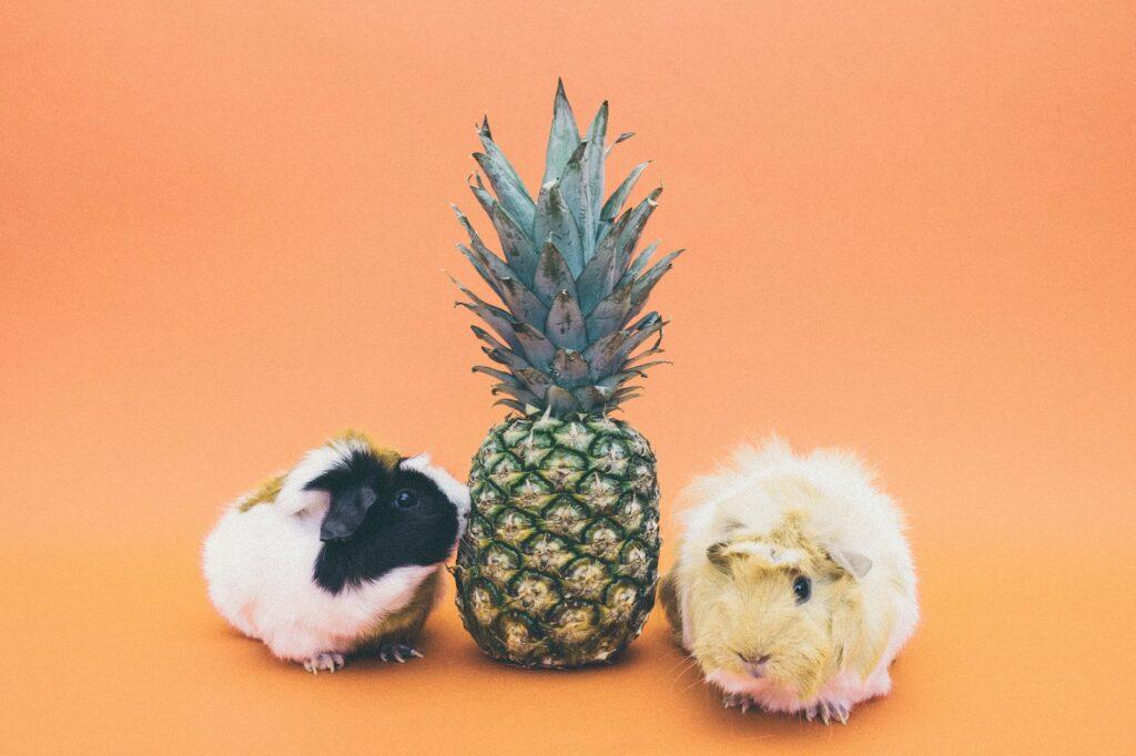 Vitamin C si nedokáží v těle vytvořit primáti a morčata, na rozdíl od jiných savců
