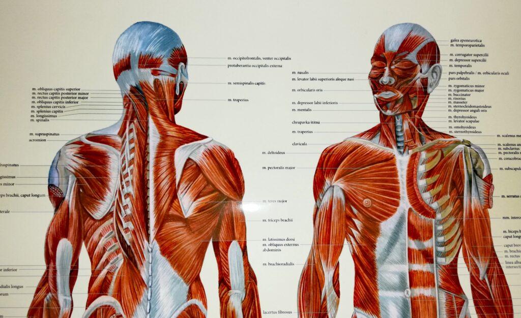 Je mnohem více činností, kterými naše zkrácené svaly přetěžujeme ještě více každý den.